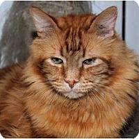 Adopt A Pet :: Homer - Palmdale, CA
