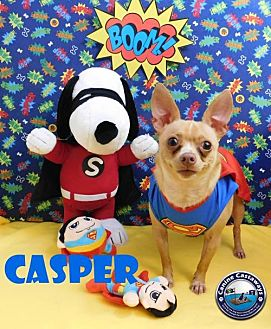Chihuahua Mix Dog for adoption in Arcadia, Florida - Casper