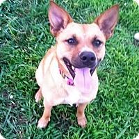 Adopt A Pet :: Riley Benz - Trenton, NJ