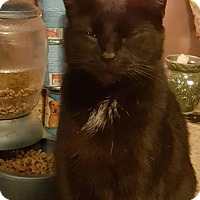 Adopt A Pet :: Hussy 1 - Hanover, PA