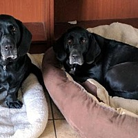 Adopt A Pet :: THELMA & LOUISE - Pennsville, NJ
