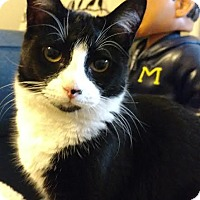 Adopt A Pet :: Moonstone 170388 - Atlanta, GA