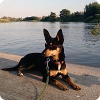 Adopt A Pet :: Dorie - Austin, TX