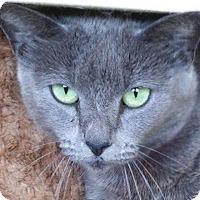 Adopt A Pet :: Jessica - Chula Vista, CA