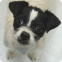 Adopt A Pet :: Jaimie - La Habra Heights, CA