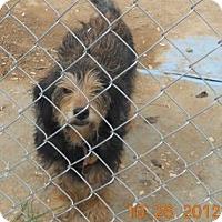 Adopt A Pet :: Thad - Albany, NY