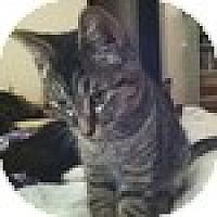 Adopt A Pet :: Loeki - Vancouver, BC