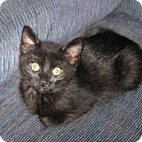 Adopt A Pet :: Hallow - Kirkwood, DE