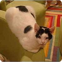 Adopt A Pet :: Cosmo-PETSMART - Muncie, IN