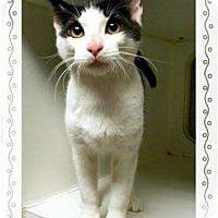 Adopt A Pet :: Harvey - Mobile, AL