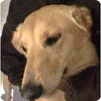 Adopt A Pet :: Hailey - Scottsdale, AZ