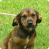 Adopt A Pet :: Will - Salem, NH