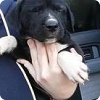 Adopt A Pet :: Toadette - Gainesville, FL