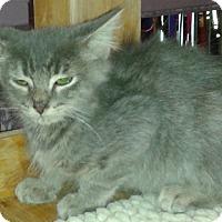 Adopt A Pet :: Jordin - Whittier, CA