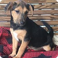 Adopt A Pet :: Rose - Spring Valley, NY