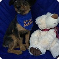 Adopt A Pet :: Noah meet me 12/2 - Manchester, CT