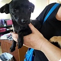Adopt A Pet :: Pepper - Lemoore, CA