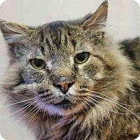Adopt A Pet :: SAMSON - Denver, CO