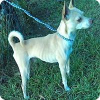 Adopt A Pet :: Carmello - North Brunswick, NJ