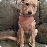 Adopt A Pet :: Gracie - Phoenix, AZ