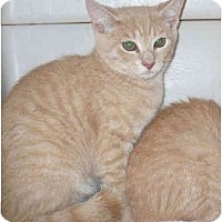 Adopt A Pet :: Mango - Colmar, PA