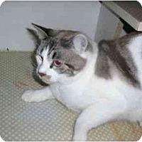 Adopt A Pet :: Riley - New Port Richey, FL