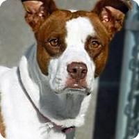 Adopt A Pet :: Precious - Cheyenne, WY