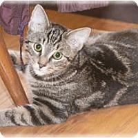 Adopt A Pet :: Ronnie - Howell, MI