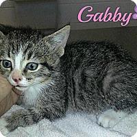 Adopt A Pet :: Gabby - Jacksboro, TN