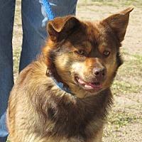 Adopt A Pet :: Harlie - Greeley, CO