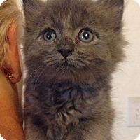 Adopt A Pet :: Bastian - St. Louis, MO