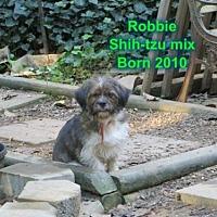 Adopt A Pet :: Robbie - Huddleston, VA