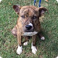 Adopt A Pet :: Aubree - Atlanta, GA