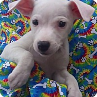 Adopt A Pet :: Josie - East Sparta, OH
