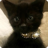 Adopt A Pet :: Tara - Westwood, NJ