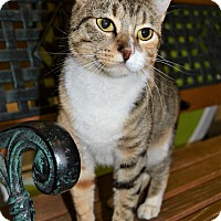 Adopt A Pet :: Gypsy - Michigan City, IN