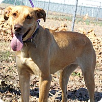Adopt A Pet :: Jewel - Mayflower, AR