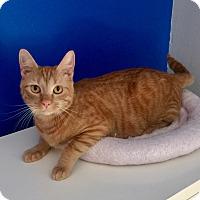 Adopt A Pet :: Natsu - Mount Pleasant, SC