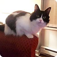Adopt A Pet :: Megan - Vancouver, BC