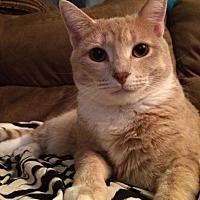 Adopt A Pet :: Koko (Courtesy Listing) - Hampton, VA