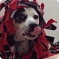 Adopt A Pet :: Frank - Austin, TX