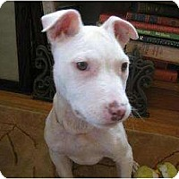 Adopt A Pet :: Sweetie - Rochester, NY