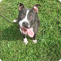 Adopt A Pet :: #346-14 ADOPTED! - Zanesville, OH