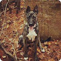 Adopt A Pet :: Jesse - Acushnet, MA