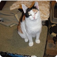 Adopt A Pet :: Abbee - Adoption Pending! - Colmar, PA