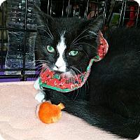 Adopt A Pet :: Mimsy - Staten Island, NY