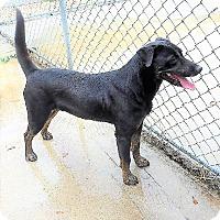 Adopt A Pet :: Zeus - Manning, SC