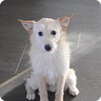 Adopt A Pet :: T-Bone - Fort Atkinson, WI