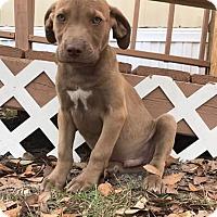 Adopt A Pet :: Prince - Jesup, GA