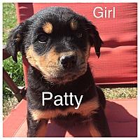 Adopt A Pet :: Patty - Oxford, CT